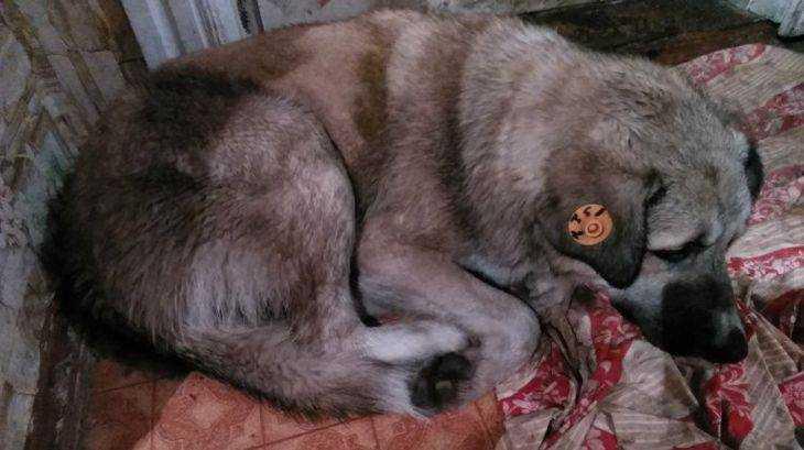 У брянского мальчика на руках погибла отравленная фаршем собака