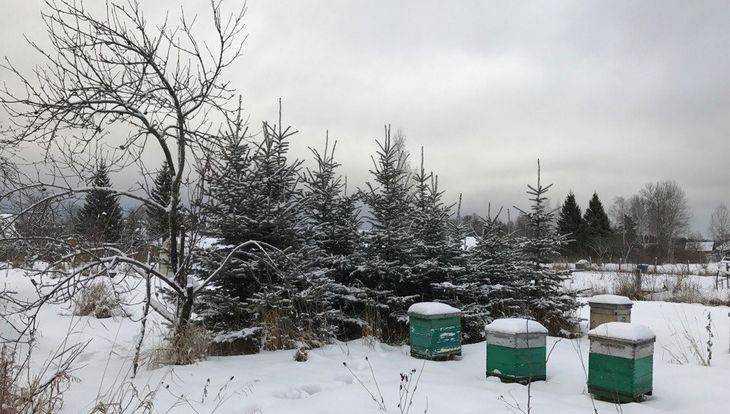 В Брянскую область 13 января придет 15-градусный мороз
