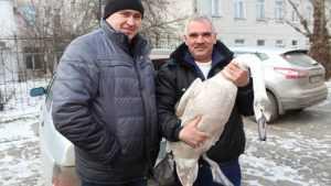 Добрые брянцы спасли лебедей из ледяного плена