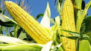 Брянские аграрии увеличили производство на 6 процентов