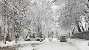 В Брянске рухнувшее на улице Горького дерево оборвало провода