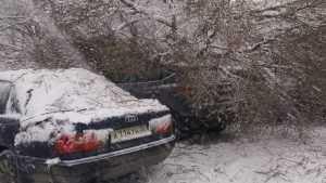 Появились фото разбитых деревом около Брянского цирка автомобилей