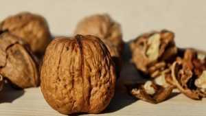 В Брянске пресекли ввоз 217 килограммов грецких орехов с Украины