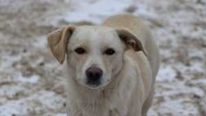 В Брянске на площади Партизан отравили собак