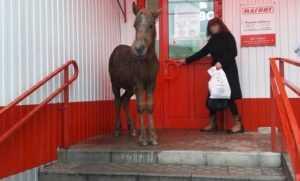 В брянский магазин «Магнит» заглянула лошадь