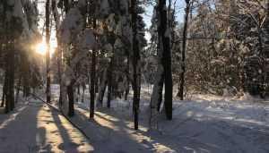 В Брянскую область ночью придёт 26-градусный мороз