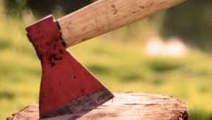Двоих брянцев осудят за вырубку 94 сосен на 1,8 миллиона рублей