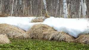 В Брянской области ночной мороз сменится 5-градусным теплом