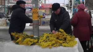 Абхазцы преодолели горы и кордоны, чтобы привезти мимозы в Брянск