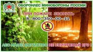 «Оборонлес» напомнил о правилах безопасности в брянских лесах
