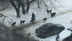 В Брянске женщина с ребенком попала в окружение семи собак