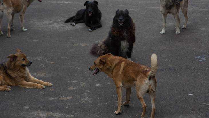 Брянские мамы пожаловались на стаи бездомных собак