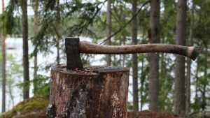 Жителя Красногорского района оштрафовали за вырубку 7 сосен для забора