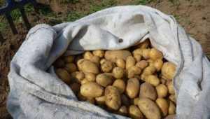 В Погарском районе брянца обвинили в краже картофеля на 450 тысяч