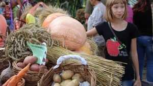 Брянские аграрии приступили к севу овощей и картофеля