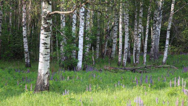 В Брянской области на майские праздники запретили ходить в лес