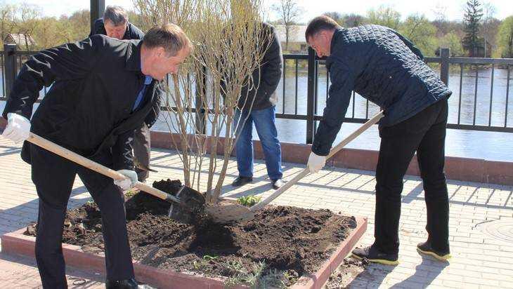 В Брянске Хлиманков и Макаров посадили на набережной ивы