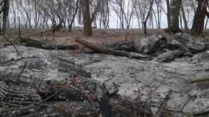 Брянцам до 15 мая запретили посещать леса