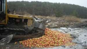 В Брянской области бульдозером раздавили 800 кг сомнительных яблок и груш