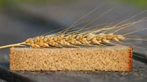Российский пищевой экспорт вырос на 21 процент