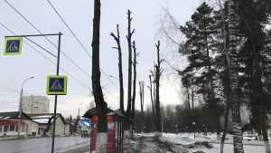В Брянске деревья превратили в страшные чернобыльские рогатки