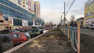 В Брянске у «Мельницы» высадят кусты вместо больших спиленных ясеней