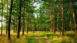 Брянцам разъяснили правила использования лесов для охотничьего хозяйства