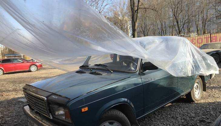 Брянские водители кинулись искать спасения от грачей-художников