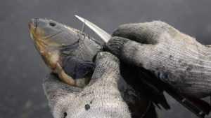 Брянские борцы с браконьерами спасли 60 килограммов рыбы