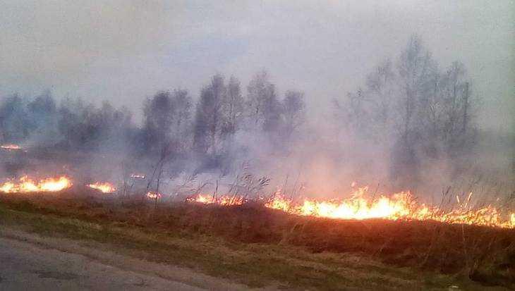 Жителей брянского села и власть объединила борьба с возгоранием травы