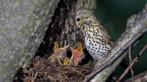 Любителей птиц пригласили в «Брянский лес» на бесплатные экскурсии