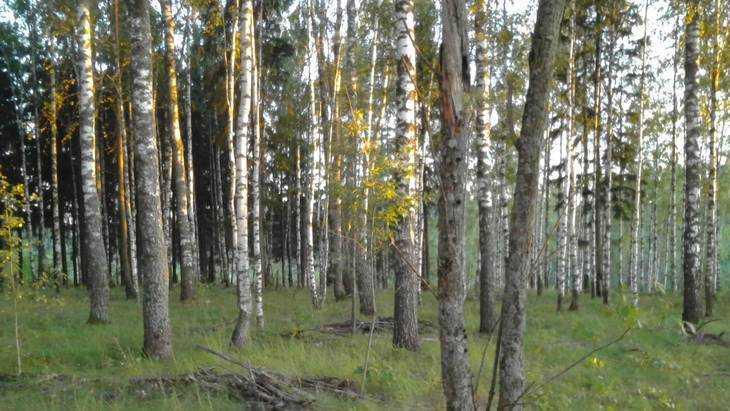 В Брянской области стартовал лесокультурный сезон