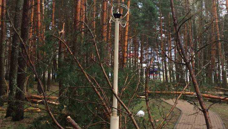 В Парке поколений Брянска поваленные деревья сломали скамьи и фонари