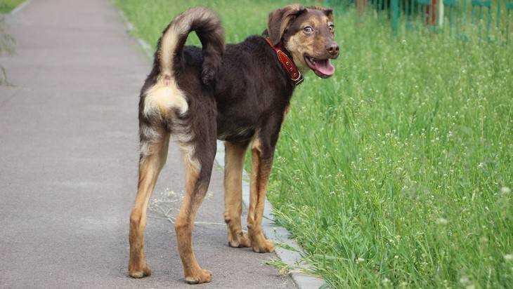 В Брянской области начали поиски беглеца из Белоруссии