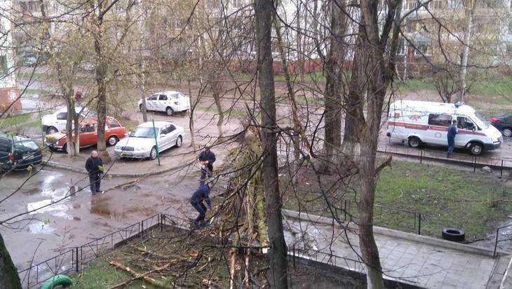 В Брянске упавший во время грозы тополь сломал ногу женщине