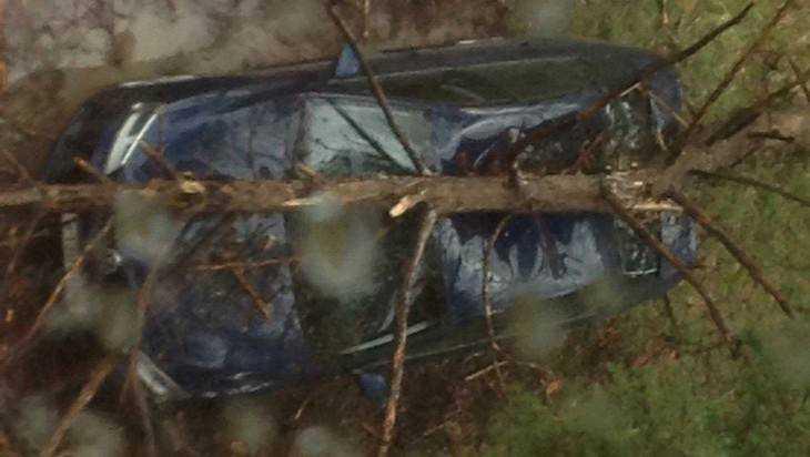 В брянском поселке рухнувшее от урагана дерево раздавило «Фольксваген»