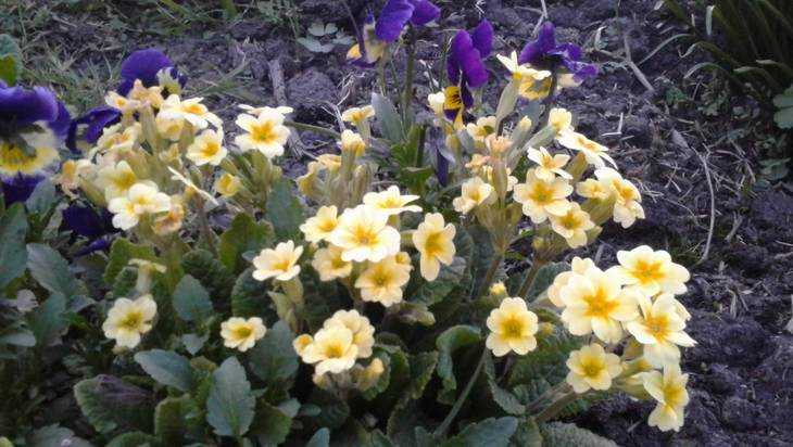Брянск летом за 8 миллионов рублей превратят в рай цветов и топиара
