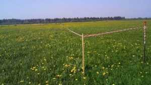 В Почепском районе бизнесмена оштрафовали за порчу сельхозземель