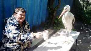 Брянская спасительница аистов создала в своём дворе приют для птиц