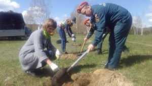 В Брянской области стартовала акция «Посади дерево»