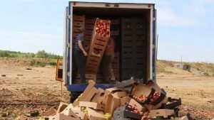 На брянском полигоне раздавили 21 тонну винограда, яблок и томатов