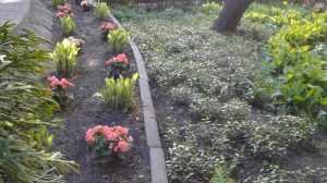 В Брянске посадят 200 тысяч цветов многих видов