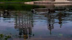 В Брянске из Десны водолазы подняли тело 33-летнего мужчины