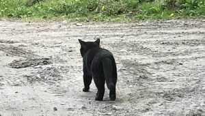 В Брянске нашли околоток гордых котов и горной первозданности
