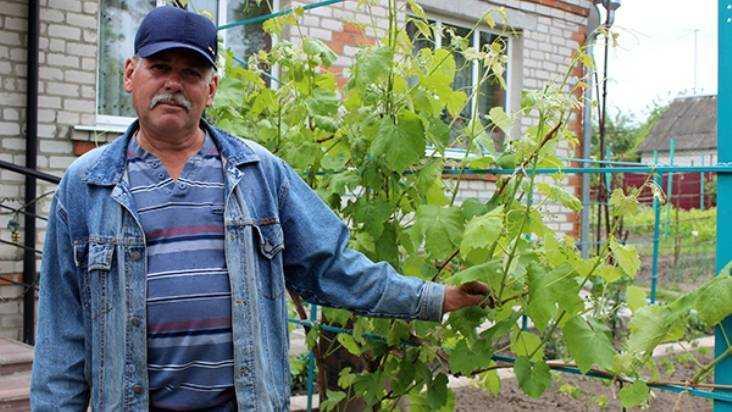 Семья Спириных из Почепского района вырастила 70 сортов винограда