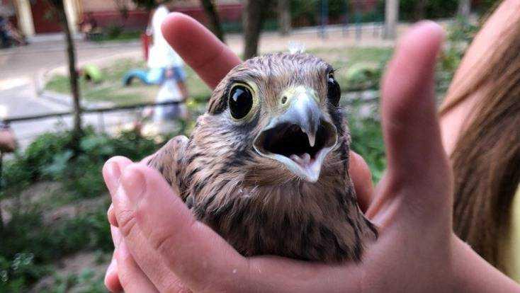 Жительница Брянска обнаружила на крыше дома птенца хищной птицы