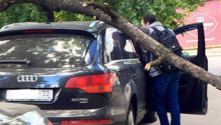В центре Брянска на дорогой внедорожник рухнуло дерево