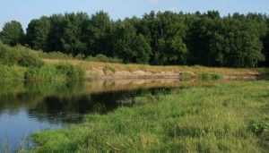 Брянский подросток утонул в реке, разыскивая заблудившихся коров