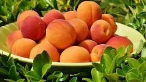 Стали известны итоги проверки брянских овощей и фруктов на нитраты