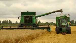 В Брасовском районе аграрии сообщили о рекордном урожае зерновых